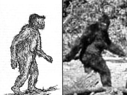 What Changed The Face Of Bigfoot