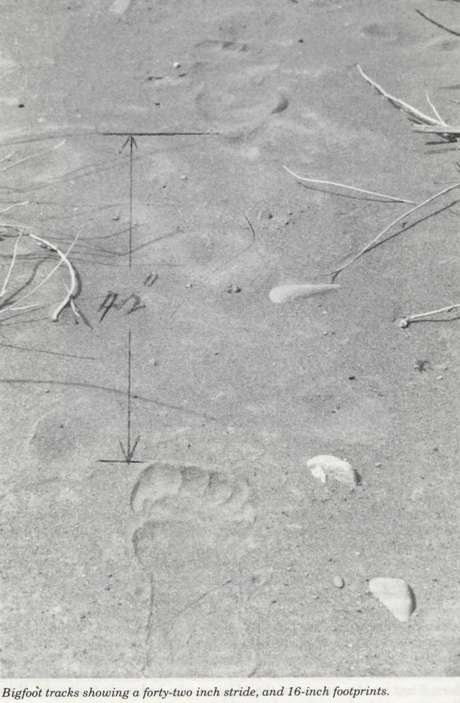 bravefootprints