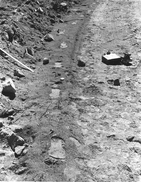 trackway-OM