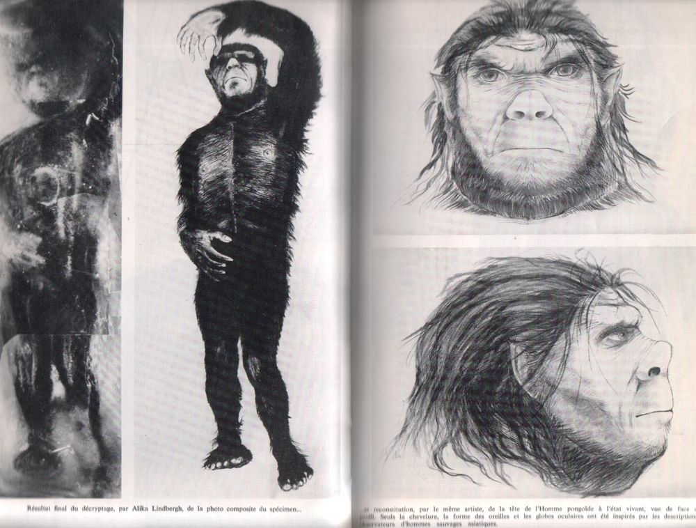 Neandertal_Homme_Pongoide_Heuvelmans