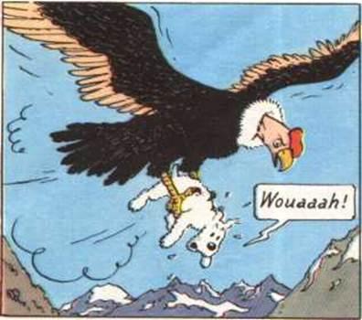 BigBird1