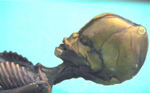 Ata-Humanoid