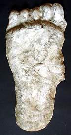 HohPrint