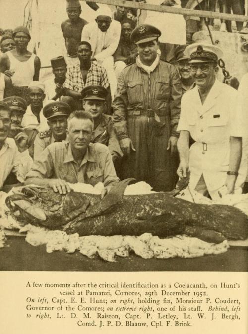 1952Coelacanth