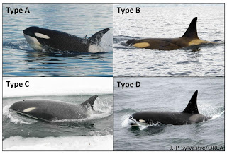 Antarctic types