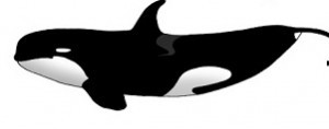 TypeD-Orca
