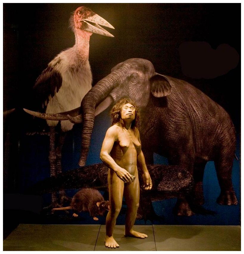 hobbit_homo_floresiensis