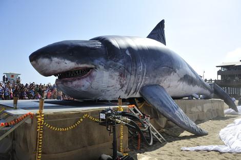 Shark Week-0008-20120723-103