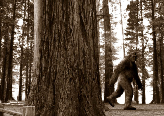 In Context, New Nebraska Bigfoot Account Makes Sense