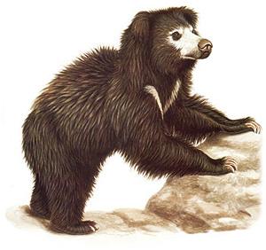 Sloth-Large_02
