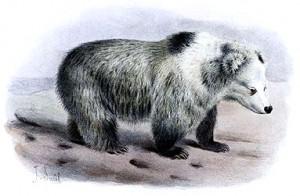 Tibetan_Blue_Bear_-_Ursus_arctos_pruinosus_-_Joseph_Smit_crop