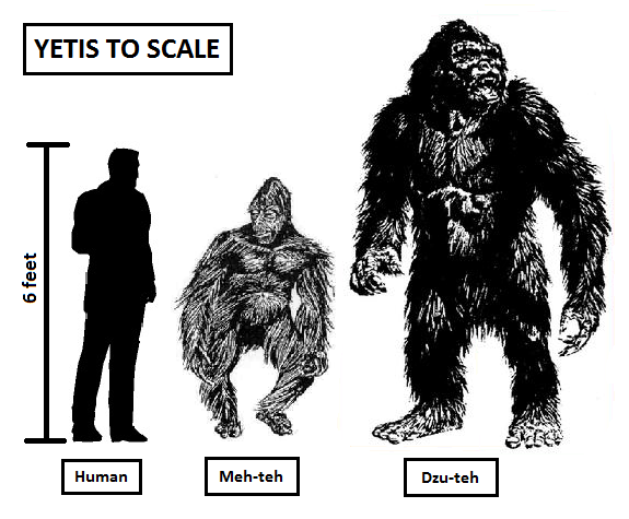 yeti scale