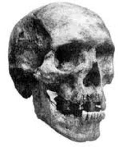 Khwits-skull
