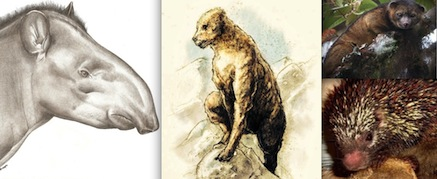 Top Cryptozoology Stories of 2013