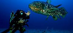 The Diamond Jubilee Year: Top Ten Coelacanth Stories of 2013