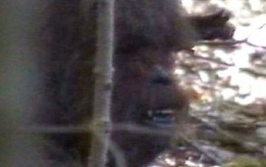 chewbacca-mask-bigfoot-or-just-plain-bullshit-e1383123060409