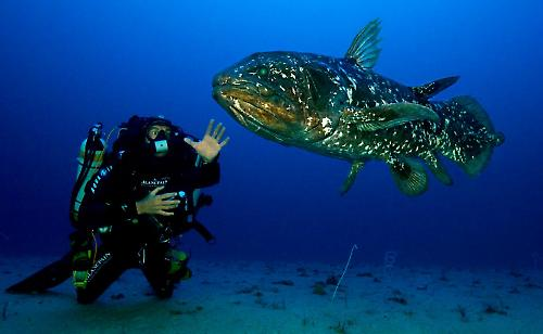 the-coelacante_redux-1