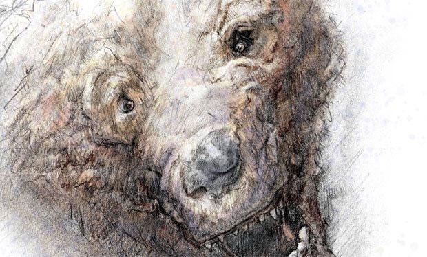 yeti-bear