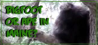 Maine Man Sights Bigfoot