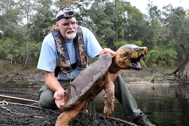 FWC biologist c... Giant Alligator Dinosaur