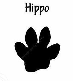 HippoTrack