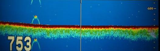 New Nessie Sonar Image?