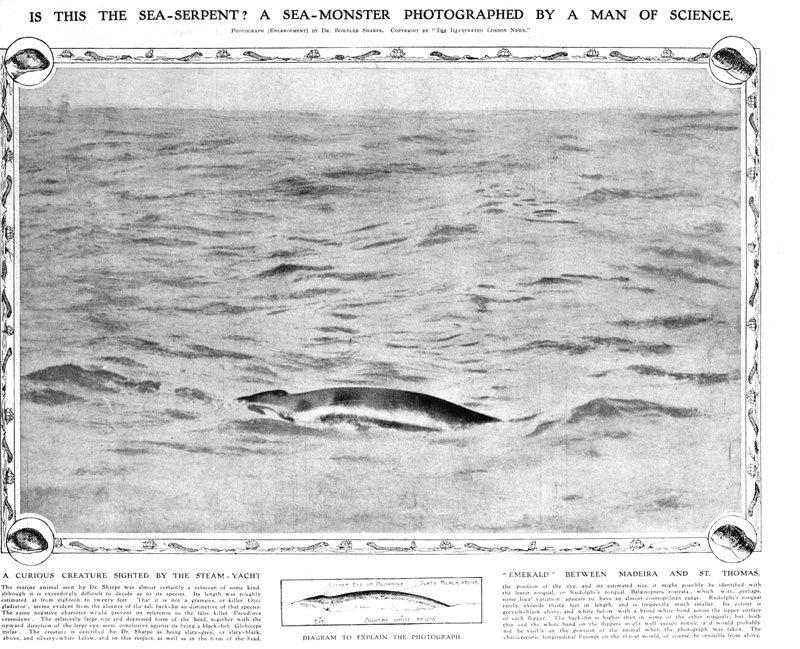 SeaSerpentNews