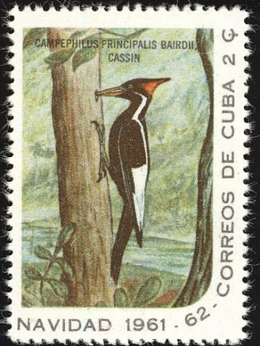 Cuba-Stamp6889-woodpecker