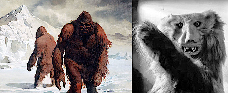 Yetis Are Bears? Not So Fast!