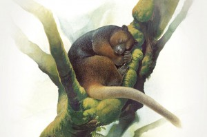 01-og-wondiwoi-tree-kangaroo-peter-schouten-wondiwoi-illustration-1996-1.adapt.1190.1