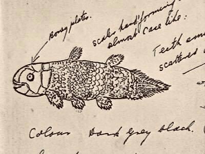 1939 coelacanth
