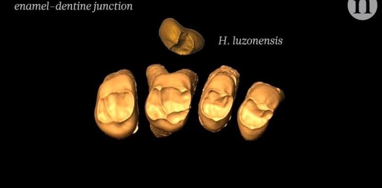 1554923013-homo-luzonensis