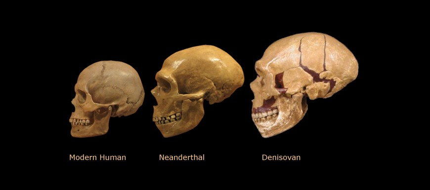 who-are-the-denisovans-and-how-does-their-discovery-alter-our-view-of-human-evolution