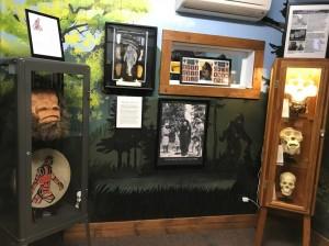 museum_cabinets_CREDIT_Jennifer_Bain_oxwneo