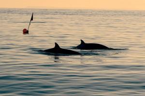 201211-new-whale-species-ew-327p-ffb0f9_6a1315ed0172864c239fbc4d7cbe8dfc1f316b28.fit-2000w