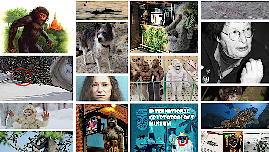 Top Ten Cryptozoology Stories of 2020