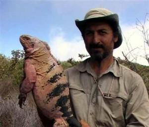 pink-iguana-300x2562
